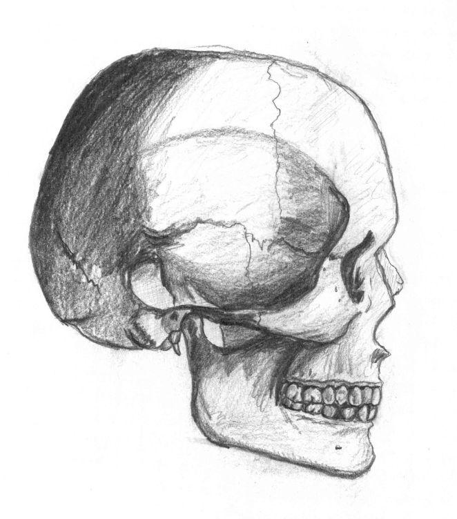 Side of Skull drawing, 12.25.14